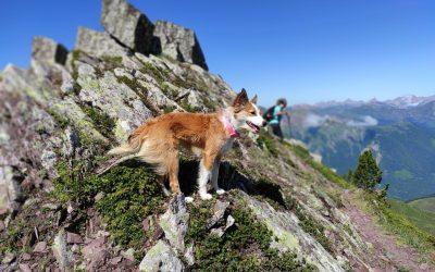Salidas  a la montaña con perros